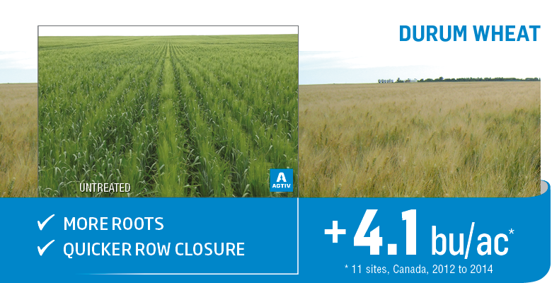 Yield increase on durum wheat