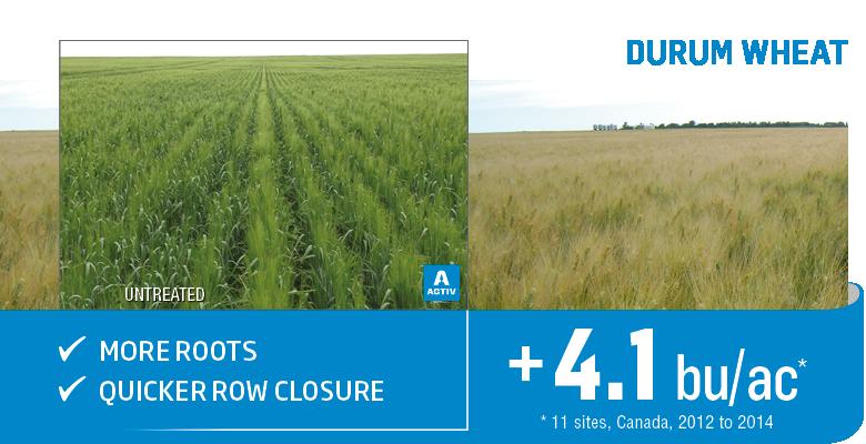 Yield increase on durum wheat