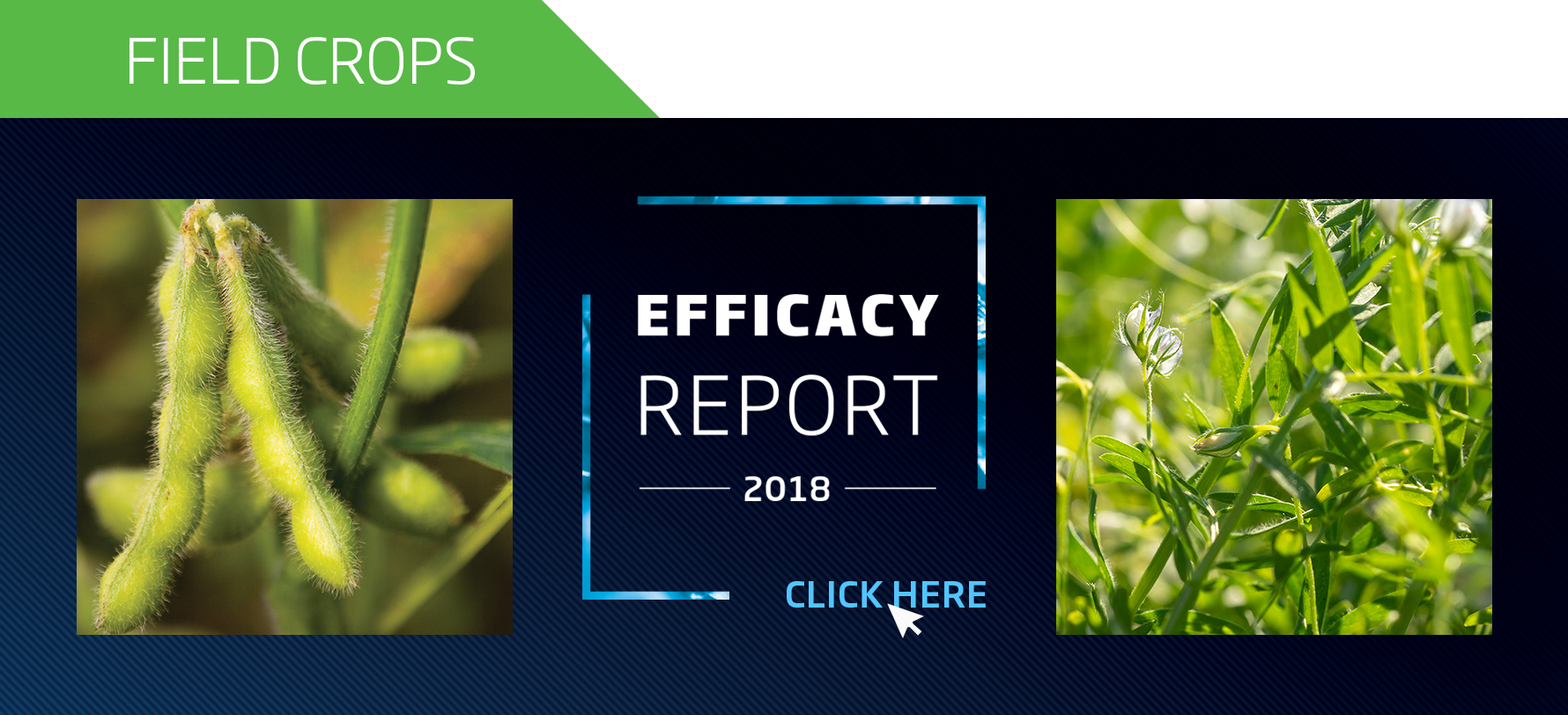 2018 Efficacy Report FIELD CROPS
