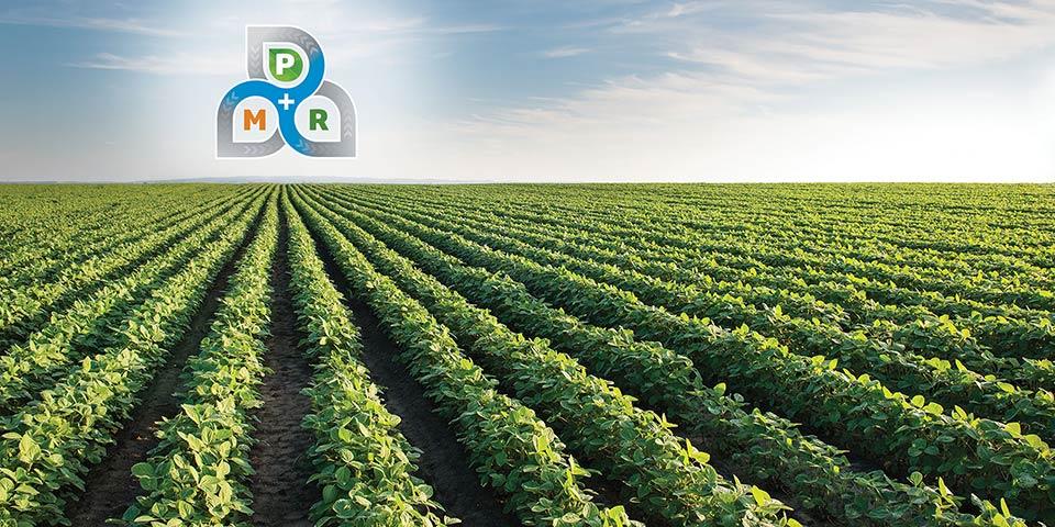 Tripartite symbiosis to improve crop productivity