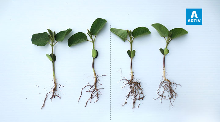 More developed root system