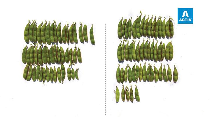 More yield per plant