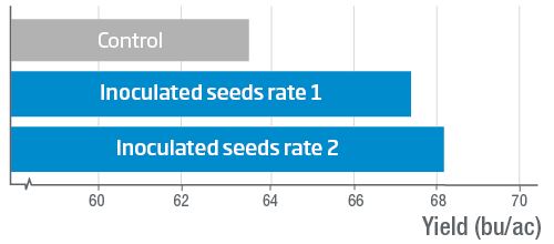 SEED INOCULATION WITH Serendipita indica INCREASES CANOLA YIELD IN FIELD CONDITIONS