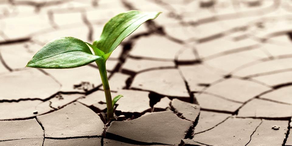 Mycorhizes et résistance à la sécheresse