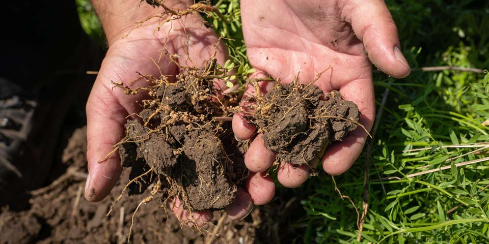 Mycorrhizae to stimulate soil's biology