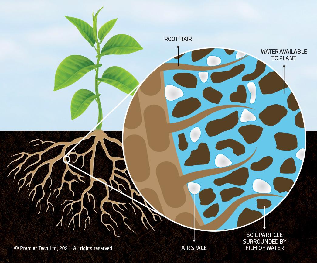 Phosphorus use efficiency with mycorrhizae